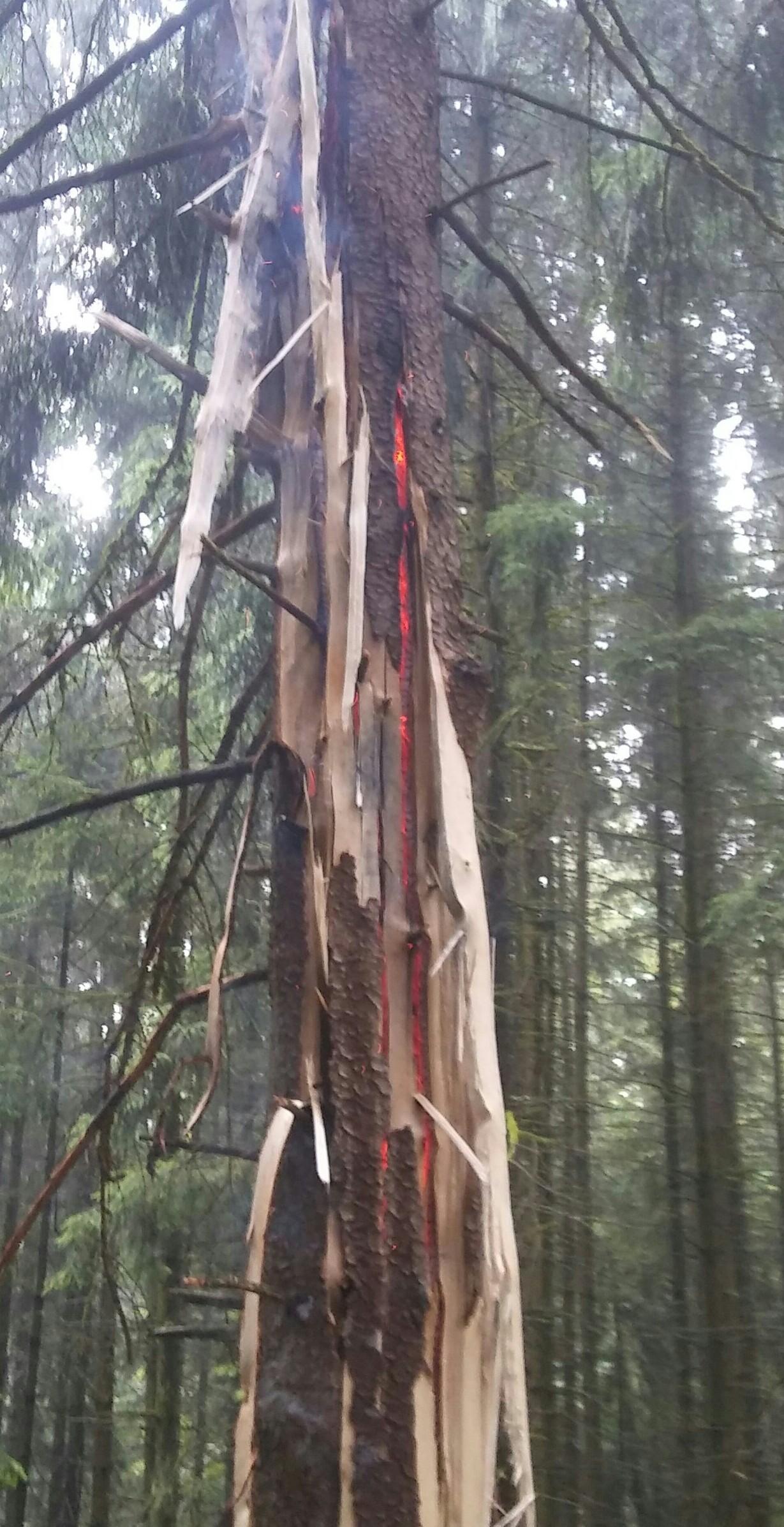 Einsatz: Brand Baum, Flur, Böschung